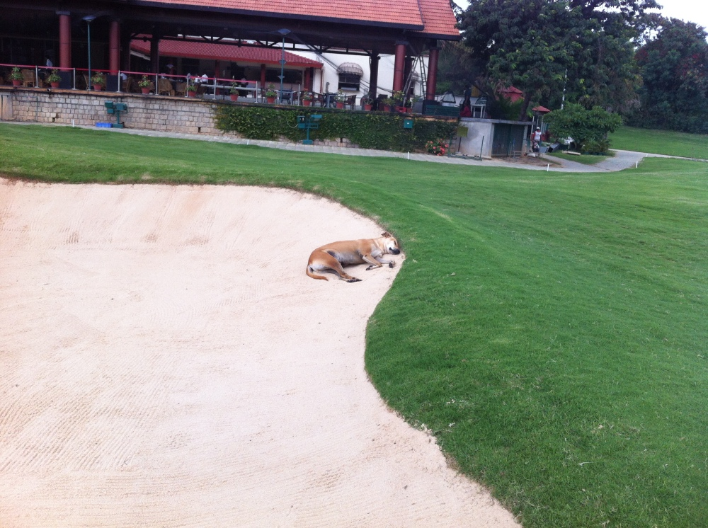 Let sleeping dogs lie...in the bunker