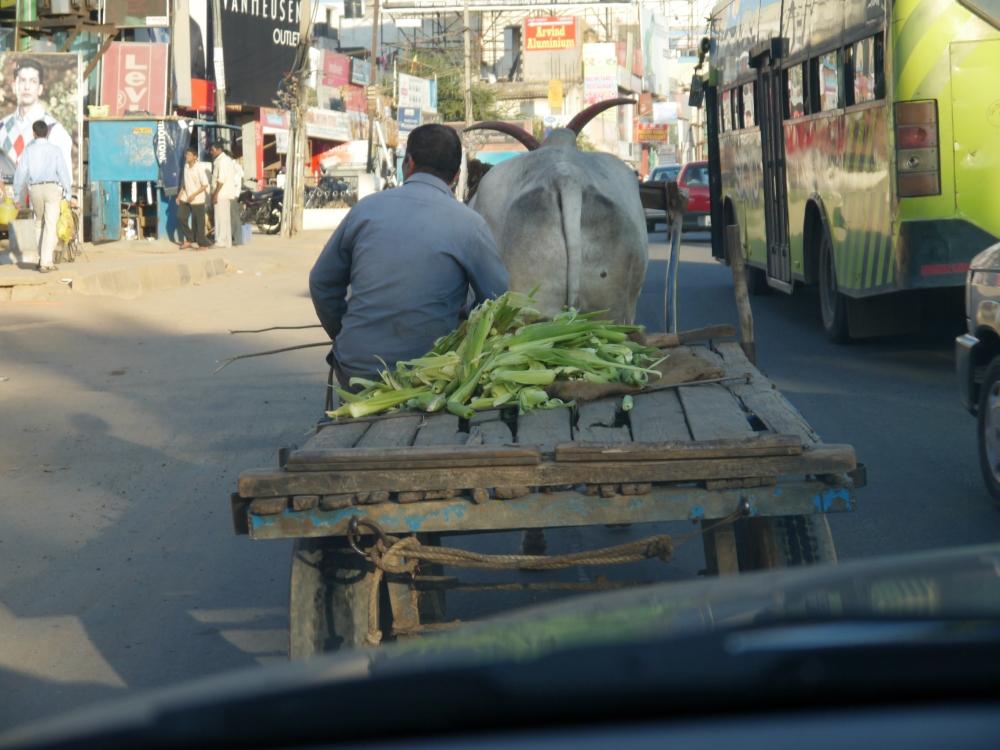 Ox cart Marathahalli