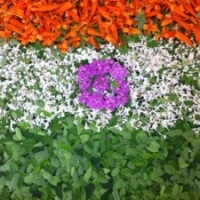 Flowers for Republic Day