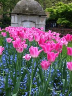 paddington gardens