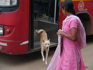 Dog steps down from bus