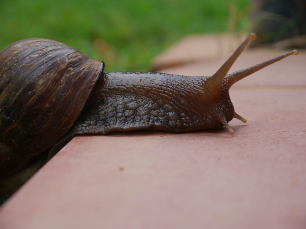 snail climbing