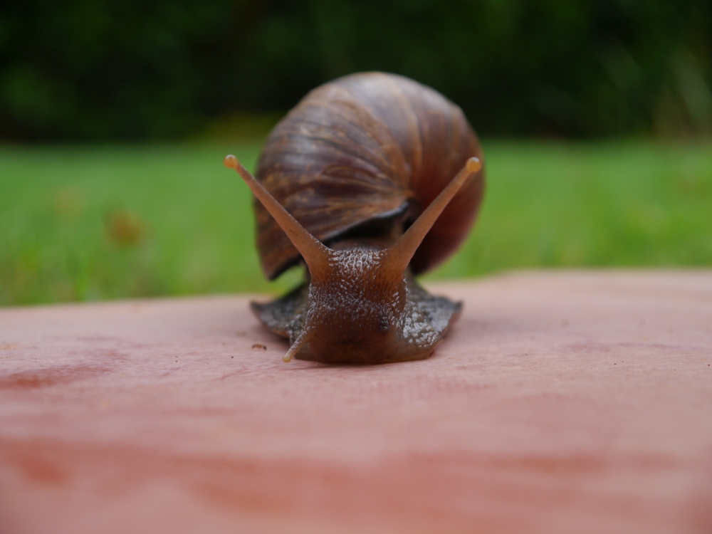 snail on terrace