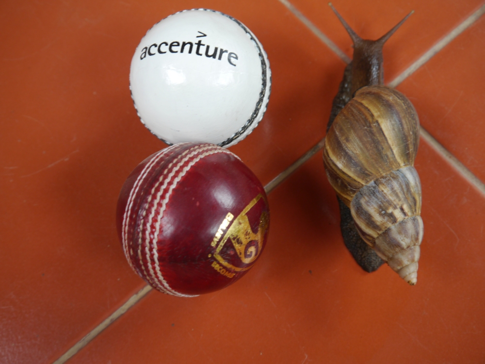 snail and two cricket balls