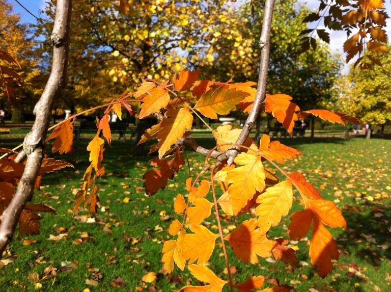 regent's park leaves 2