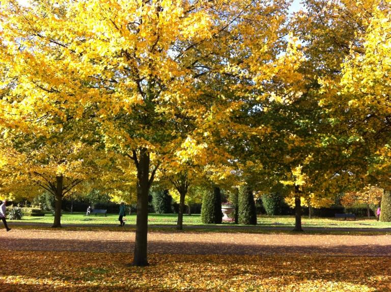 Regent Park trees 1