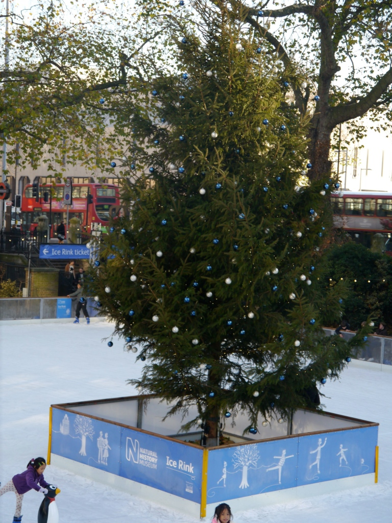 NHM ice rink tree