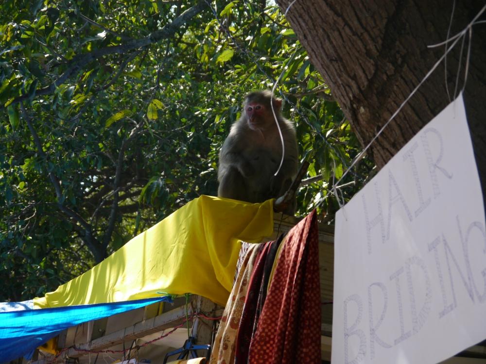 monkey braiding stall