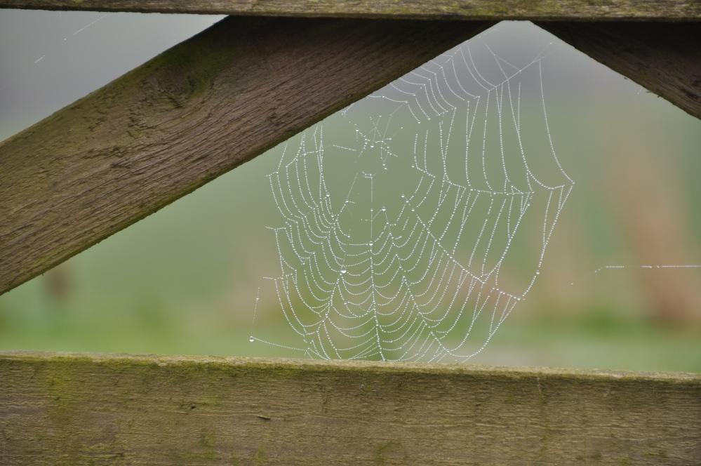 wooden gate dewy web 2