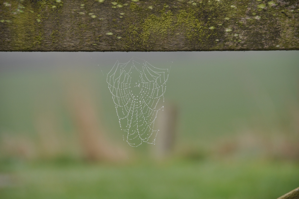 gate and tiny web