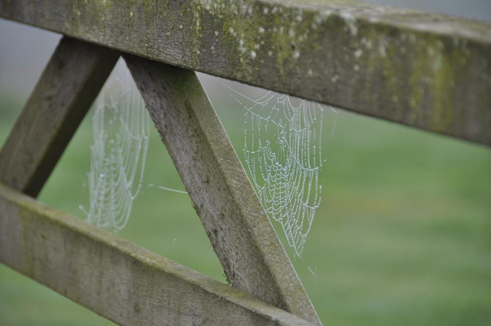 gate with 2 webs sideways