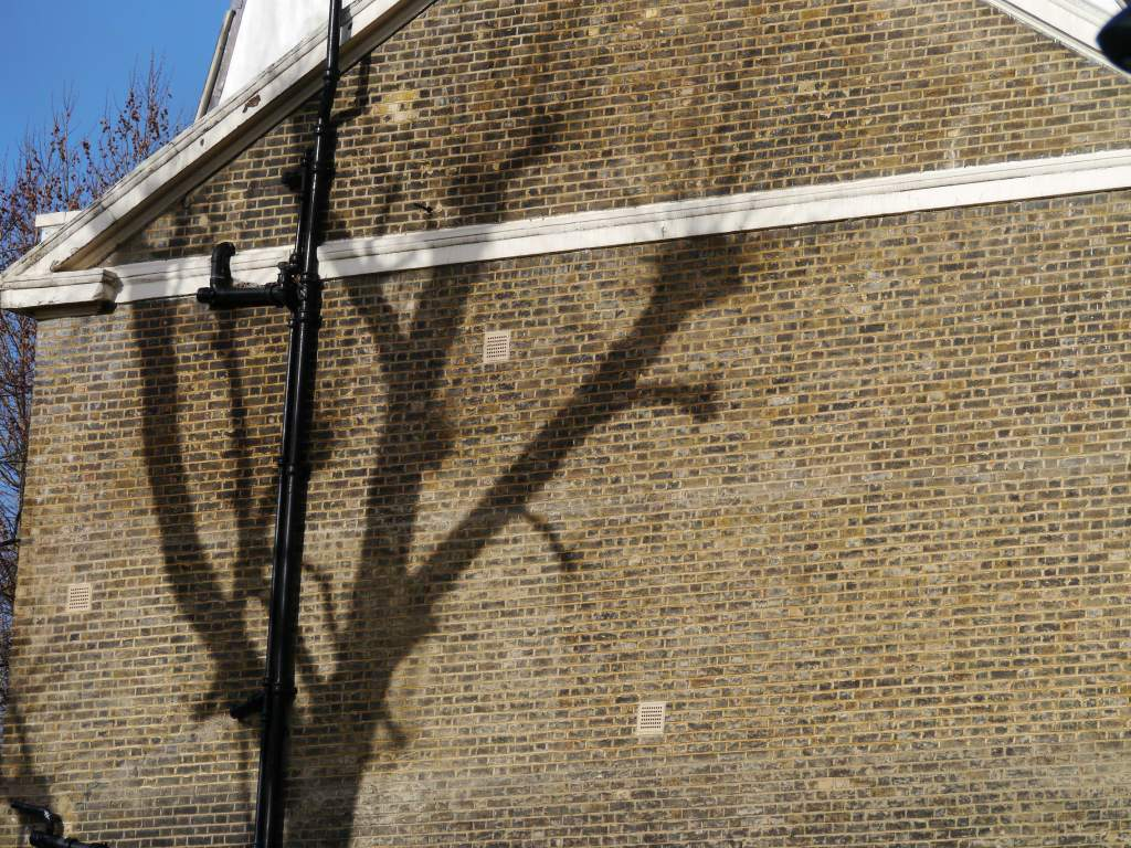 Tree shadow Tavistock Sq