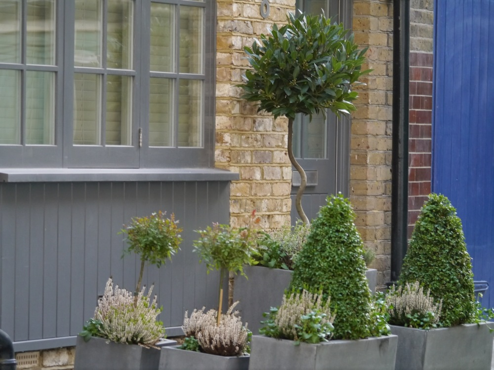Tree and shrubs in containers