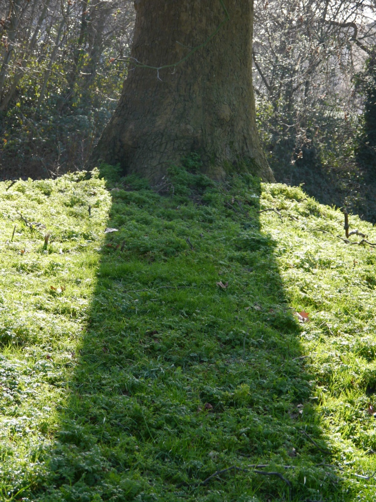 Shadow of tree in Regent's Park