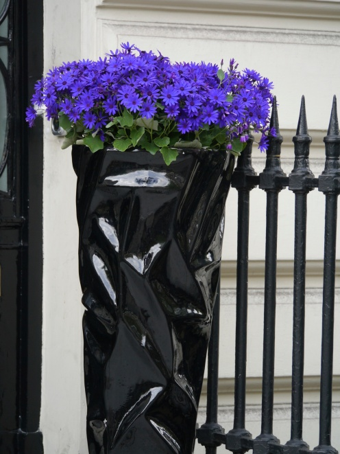 purple flowers in black container