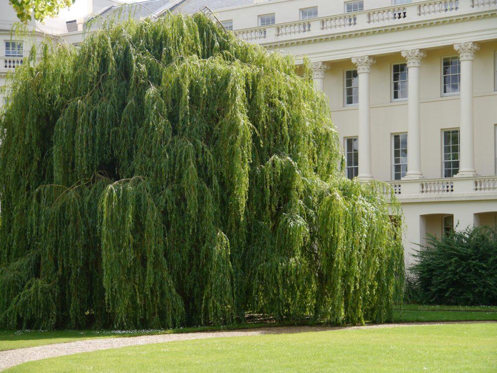 LBS garden