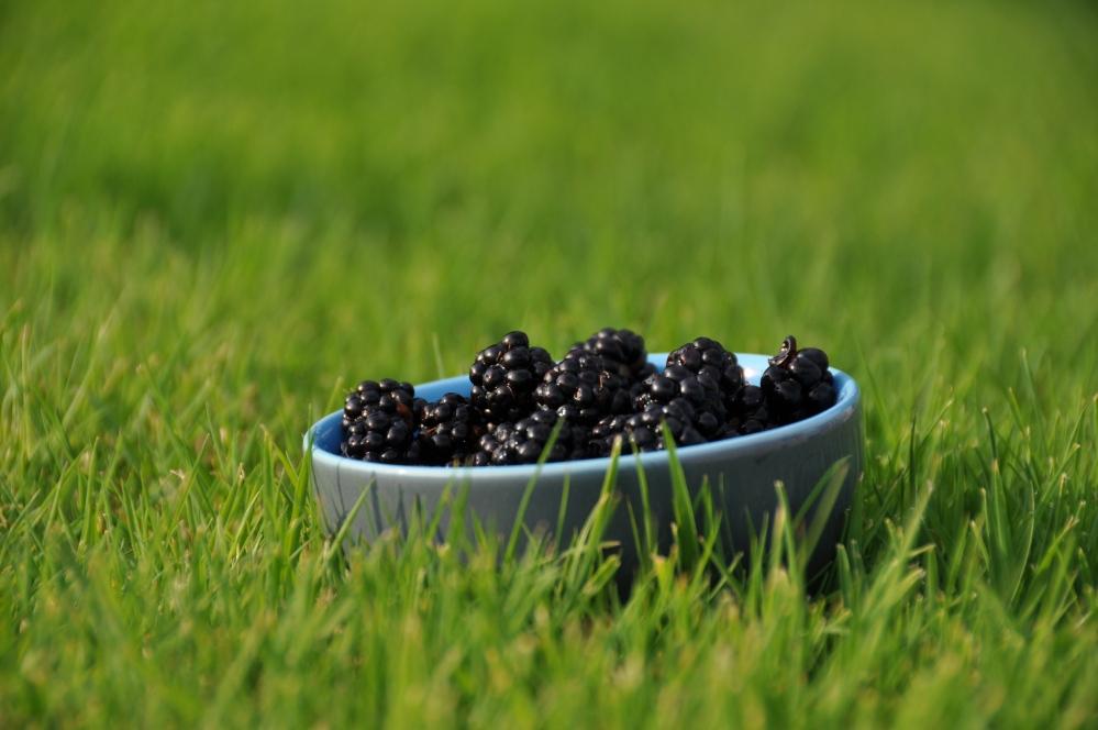 blackberries in blue bowl on grass