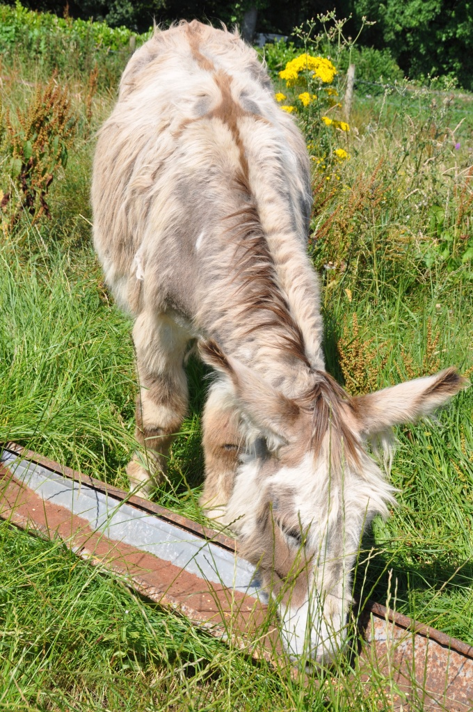 donkey with cross at trough