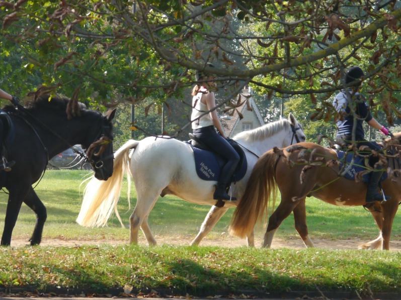 Horses - shining tail