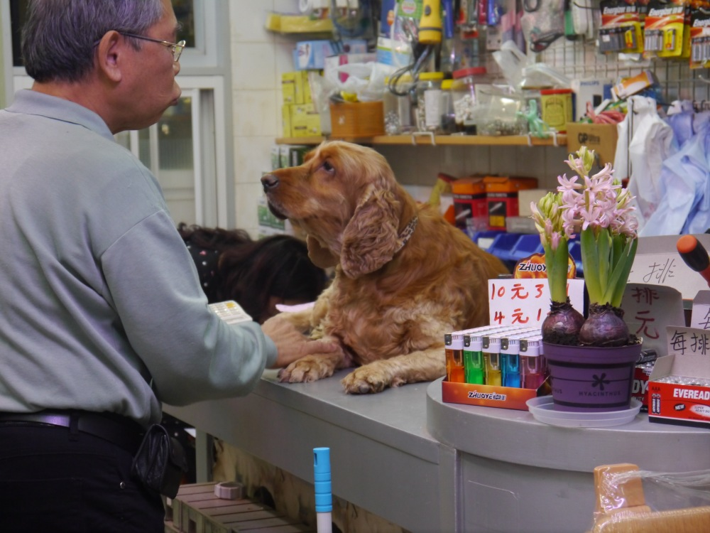 Hong Kong shopkeeping dog