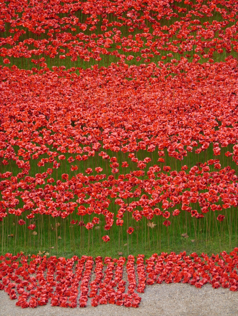 Poppies in waves