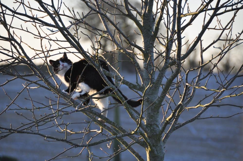 Bono climbing tree 3