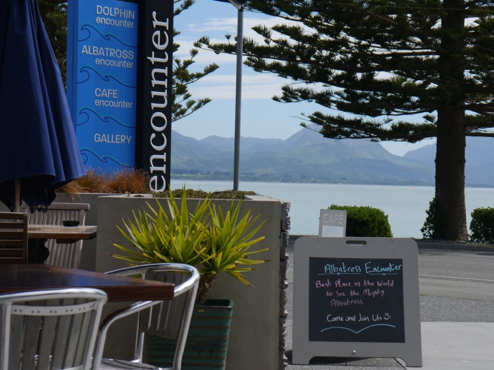 Cafe Encounter Kaikoura